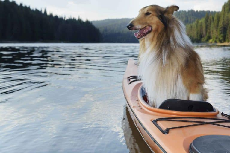 The Best Kayak For Dogs In 2021 – Buying Guide And Reviews