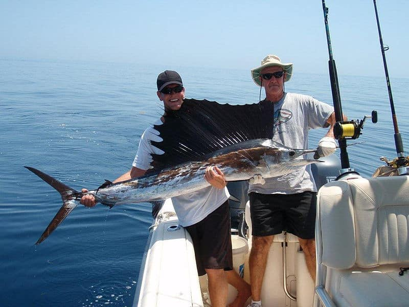 best bait for sailfish