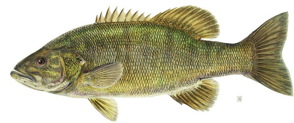 what do smallmouth bass eat?