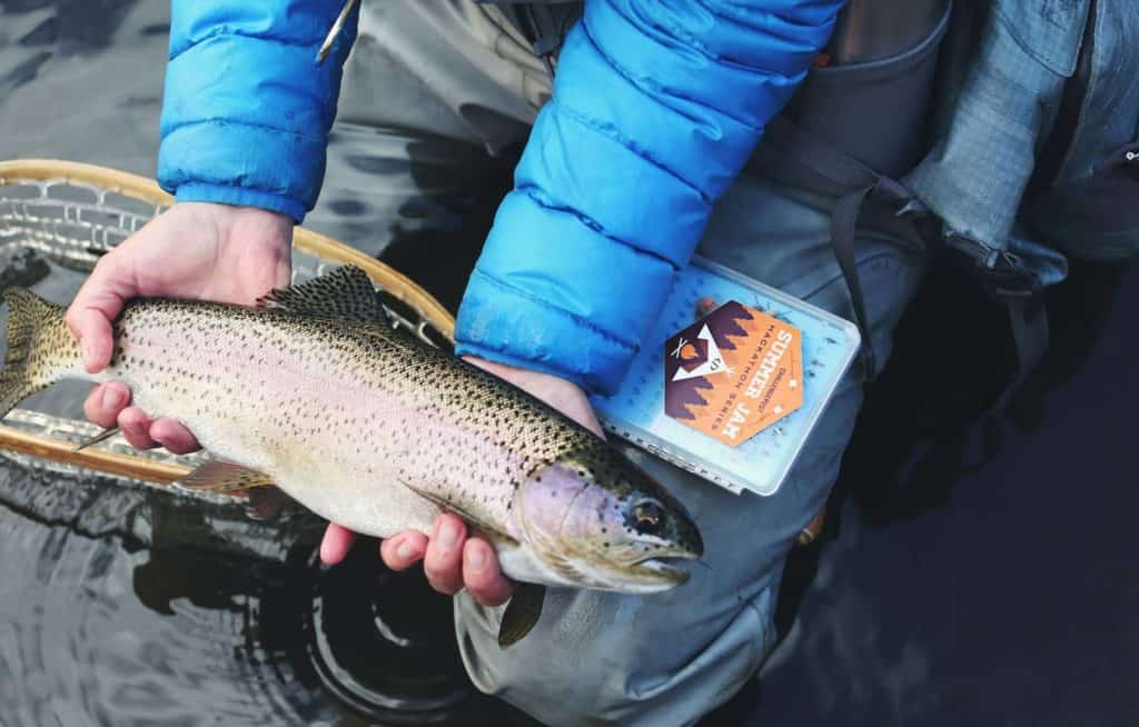 how to trout fish