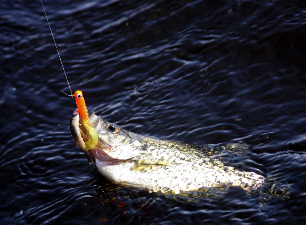 15 Best Jig for Crappie Fishing