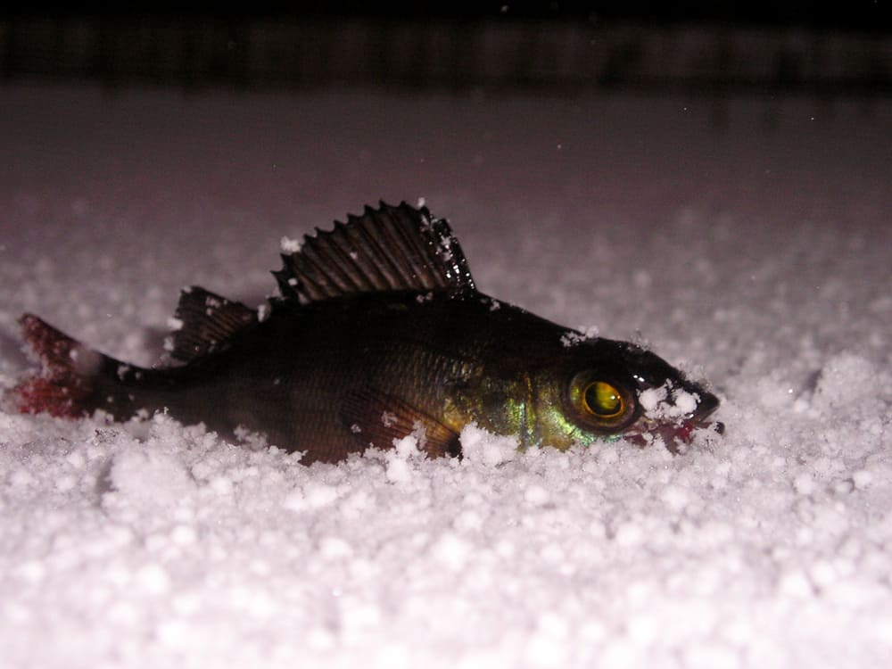 Ice fishing for perch at night