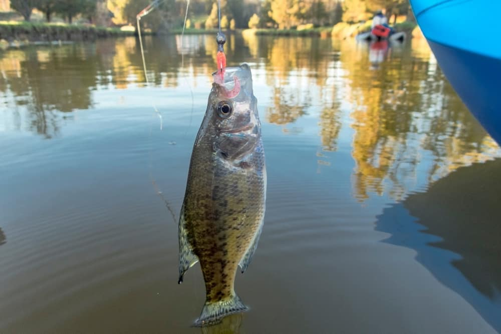 How To Tie A Crappie Jig