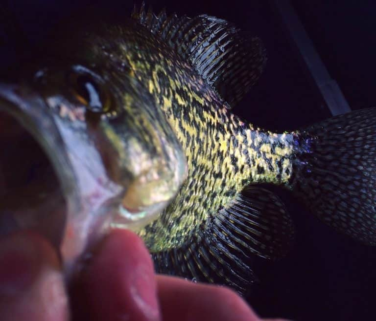Ice fishing Crappie At Night Tips