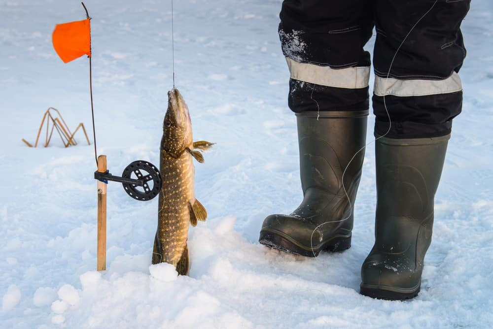 How to rig a tip up for pike